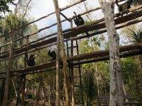 Santuario de monos