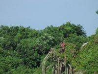 Flora de selva