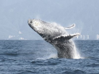 Dos Amantes Custom Charters Whale Watching