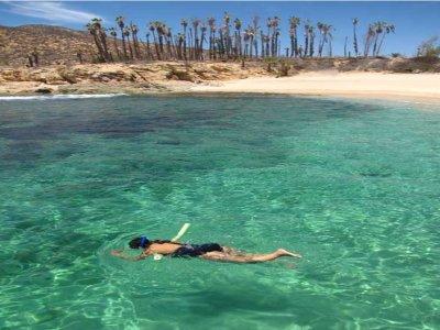 Oceanbliss Cabo Snorkel