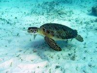 Tortugas en Cancun