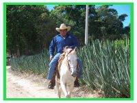 Cabalgata en Jalisco