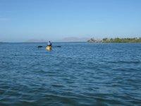 Kayals en manglares