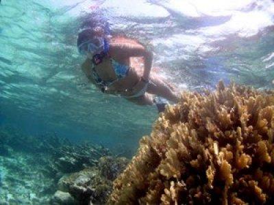 Playa Diving Center Snorkel