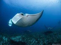 nado en le fondo del mar