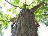 Tree to Climb