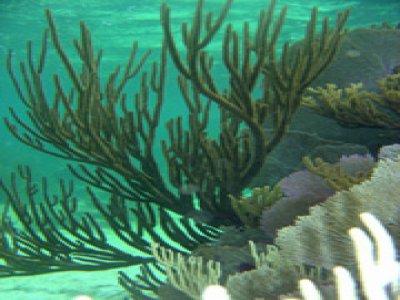 V.I.P. Diving Snorkel