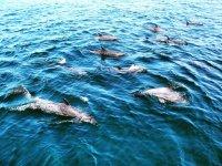 Conoce los delfines