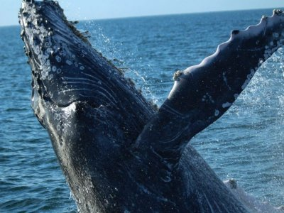 Tours in Vallarta Whale Watching