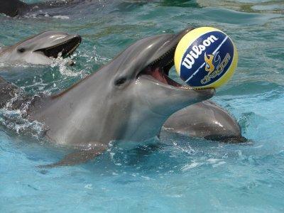 Tropical Incentives Nado con Delfines