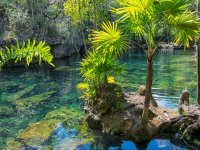 Know the cenotes