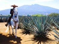 Riding horseback riding