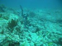 Cazando debajo del agua