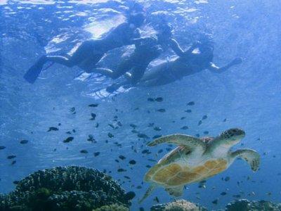 Oceanus Snorkel