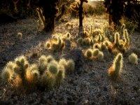 Plantas cactáceas