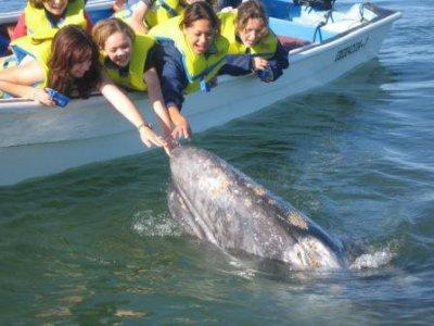 Baja Outdoors Activities Whale Watching