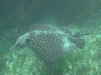 Los animales del fondo marino