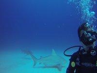 Mira a los tiburones mientras buceas