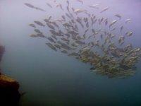 Banco de peces