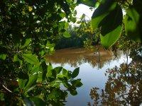 Kayak in mangrove
