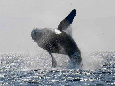 Puerto Vallarta Fun Whale Watching