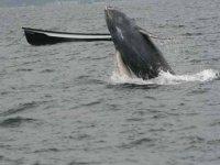 Ver ballenas en mar abierto