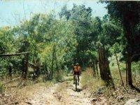 Recorre en bici el bosque