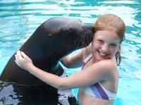 Nado con leones marinos
