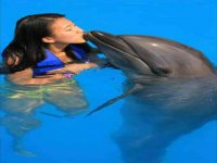 Beso de delfin