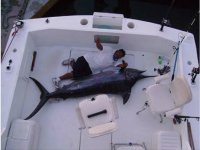 Un buen dia de pesca