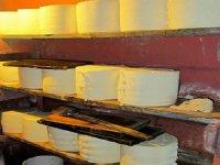 cheese workshop