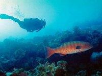 Diving Acapulco