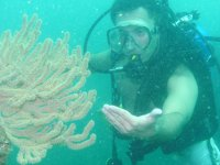 Corals in the sea of ​​Sonora