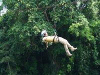 Volando en la selva
