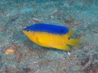 Fish of the Caribbean