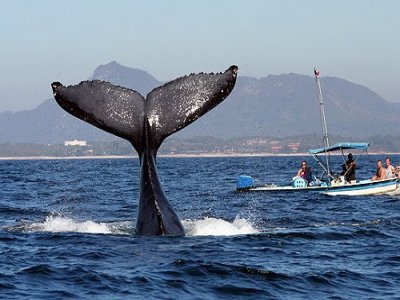 Punta Mita Expeditions Whale Watching