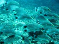 Descubriendo el mar con snorkel