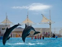 Show dolphins