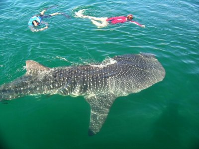 Aventuras México Profundo Snorkel