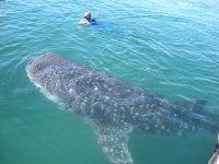Snorkeleando en Baja California