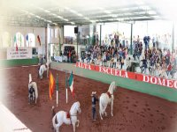 We include equestrian show