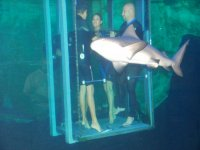 Shark food