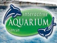 Interactive Aquarium Nado con Delfines