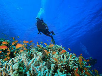 The One Baja Buceo