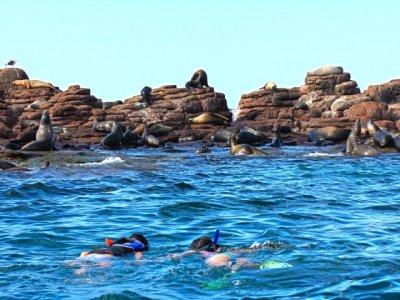 The One Baja Snorkel
