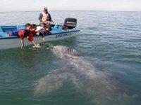 Children enjoying the whale