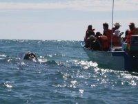 Observación ballena gris