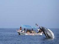 ballena cerca de la embarcacion