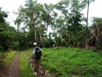 Bike path through the jungle