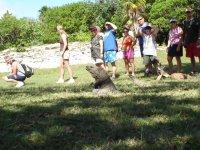 Iguanas grandes